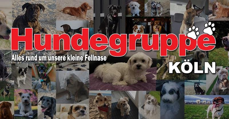 facebook-hundegruppe-koeln-gruppenbild-800x418