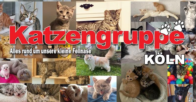 facebook-katzengruppe-koeln-gruppenbild-800x418